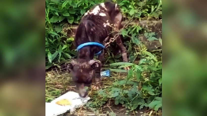 Anjing Terlantar Lembah Dieng Viral, Ini Penjelasan Pemilik Anjing