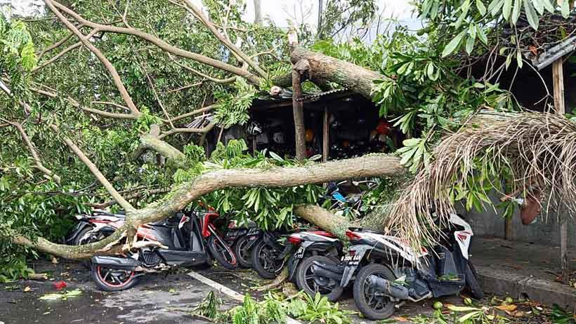 Angin Kencang, Pohon Besar Tumbang di Samping MOG, Timpa 7 Motor