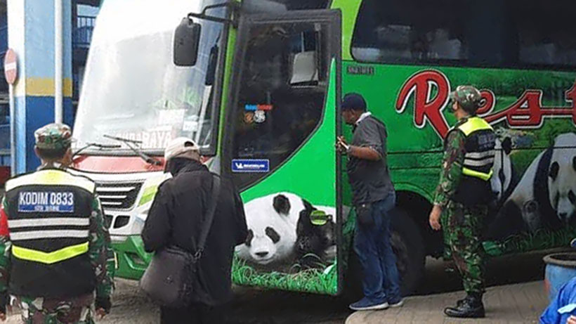 Operasi Tapal Batas, Koramil Blimbing Sweeping Bus Di Terminal