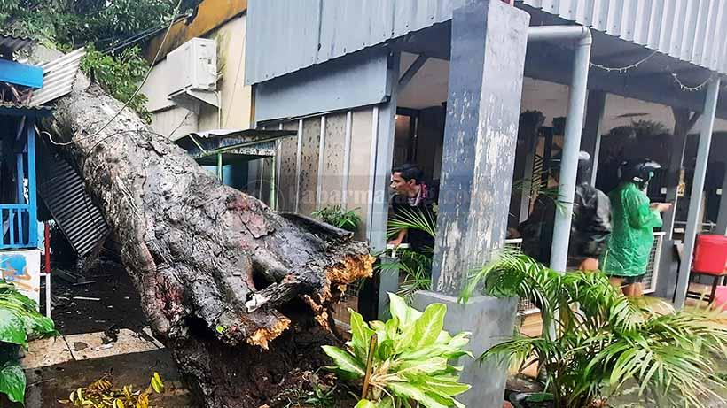 Pohon Besar Timpa Rumah Warga di Jalan Thamrin Kota Malang