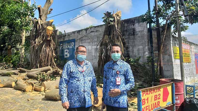 DLH Kota Batu Sidak Penebangan Pohon Di Area Parkir Jatim Park 1