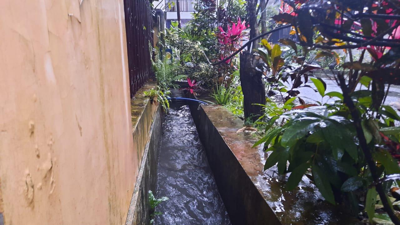 Geger, Buaya Berenang Dalam Selokan di Sukun Kota Malang