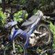 Kecelakaan Di Malang Hari Ini, Satu Wanita Tertabrak Mobil Pickup